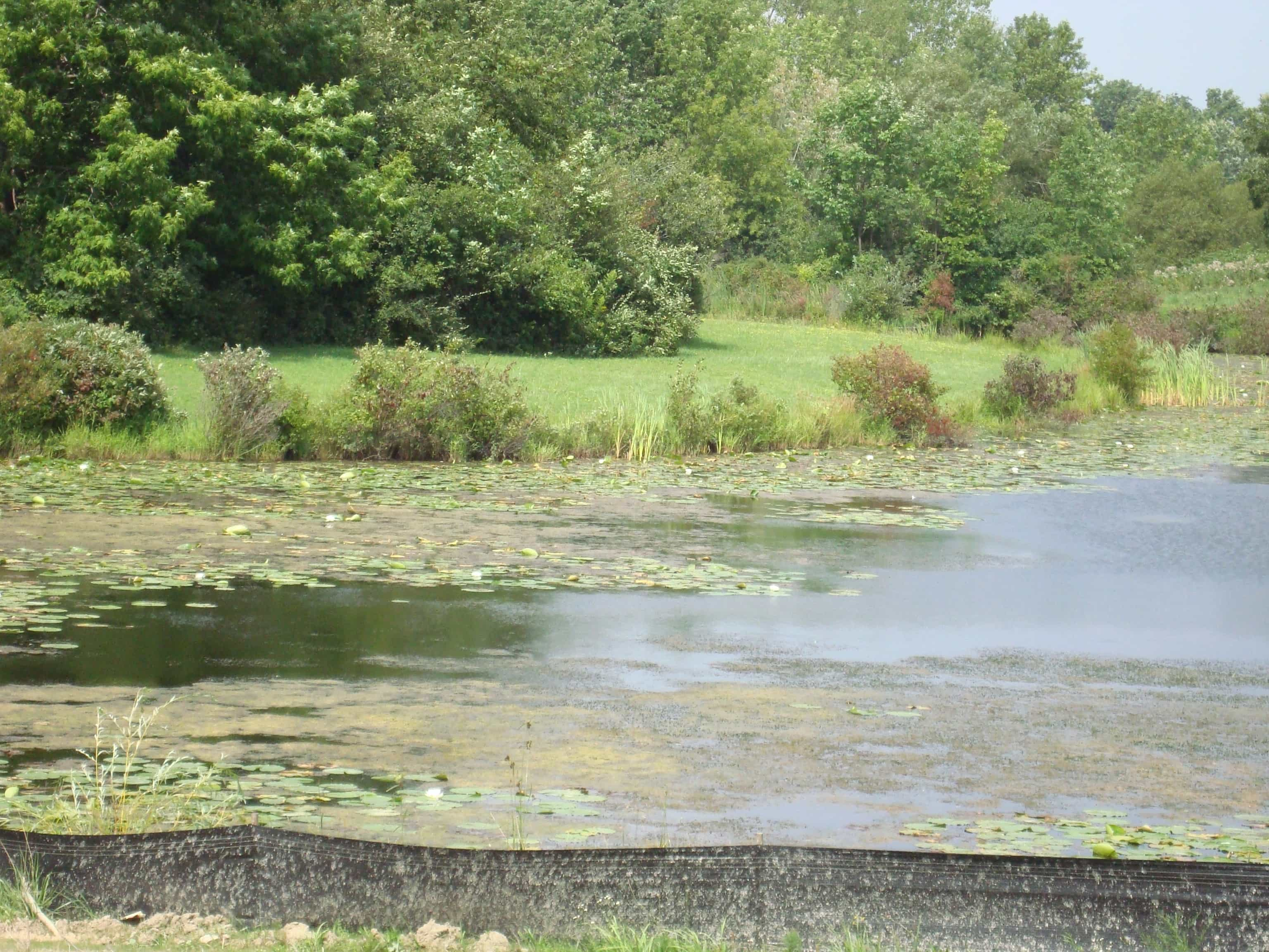 Kasco aeration will help manage and reduce pond sludge.