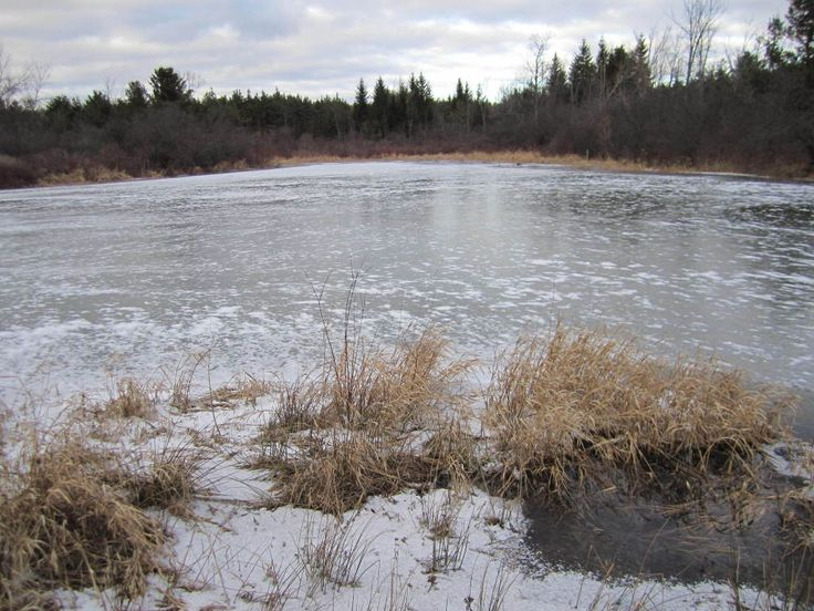 Pond in Winter Months