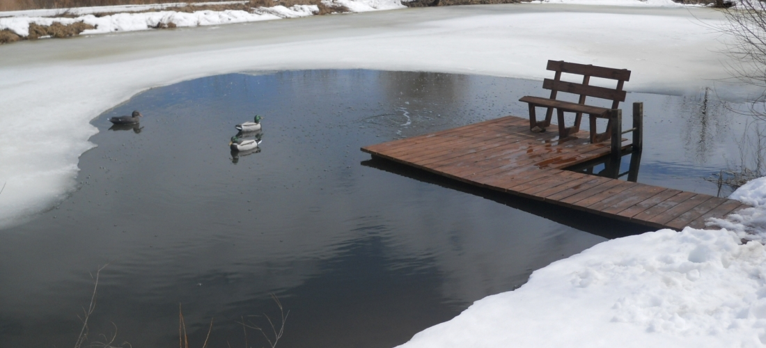 Are Your Fish Worried to Death Over Winter?