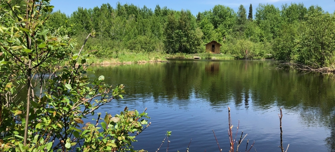What Do You Love About Your Pond?