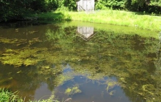 Introduction to Aquatic Plants