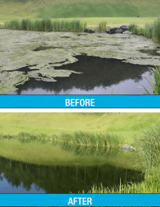 macrozyme-algae-before-after