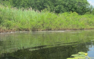Ways to Prevent Nutrients and Erosion from Filling in Your Pond
